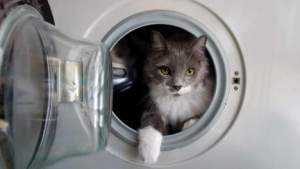 kat en wasmachine