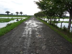 Gaten in de weg